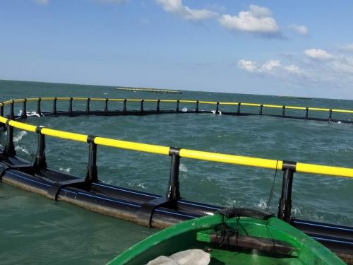 90米圆形深水网箱