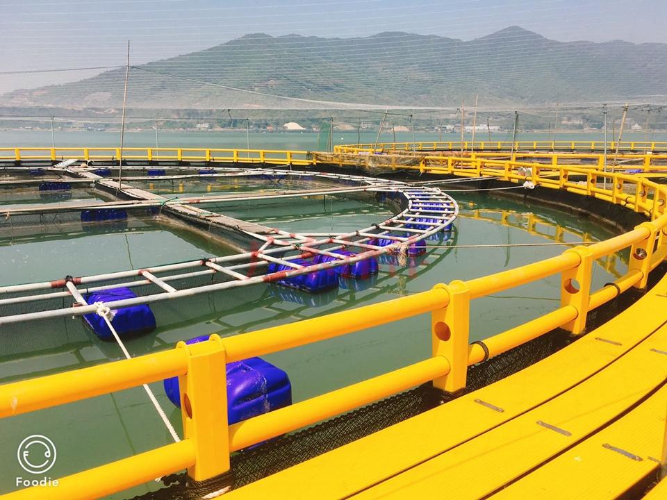 韩式深水网箱1
