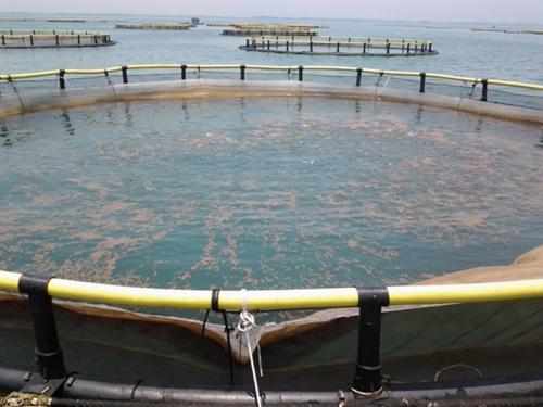 挪威式深水网箱、养殖网箱2
